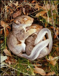 lazy squirrels not cleaning the house and this has nothing to do with Feminist Poet: Hollie Poetry