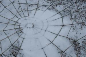 snowy spider web climber